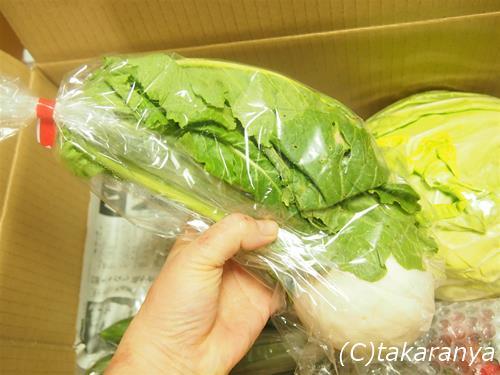 150207kyushu-yasai8.jpg