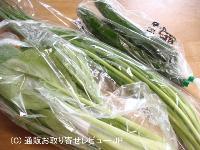 小松菜、小ねぎ、きゅうり